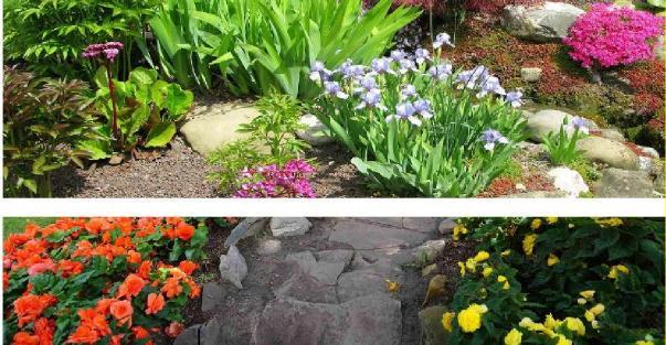 kaya bahçe bitkisi