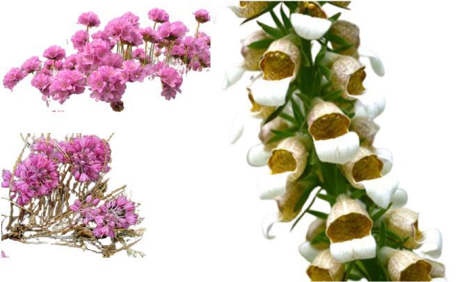 kazdağı çiçekleri