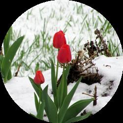 kış çiçeği türleri nelerdir