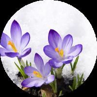 kışın çiçek açan bitkiler