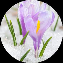 kışın çiçeklenen bitkiler
