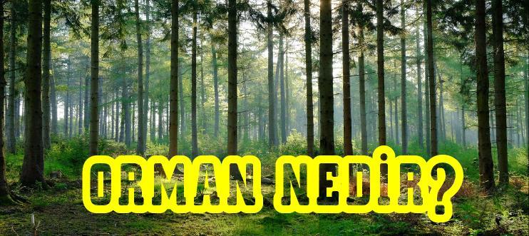 orman nedir?