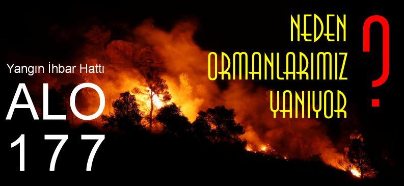 orman yangını neden çıkar