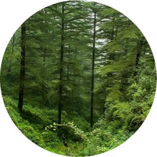 ormanın üretiiği oksijen miktarı