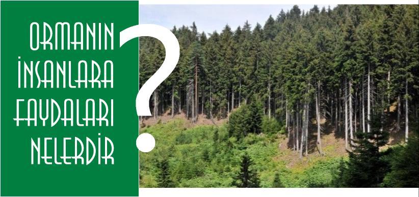 ormanların insanlara faydası nedir