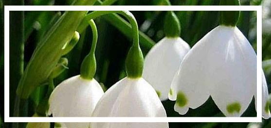 özbekistan bitkileri