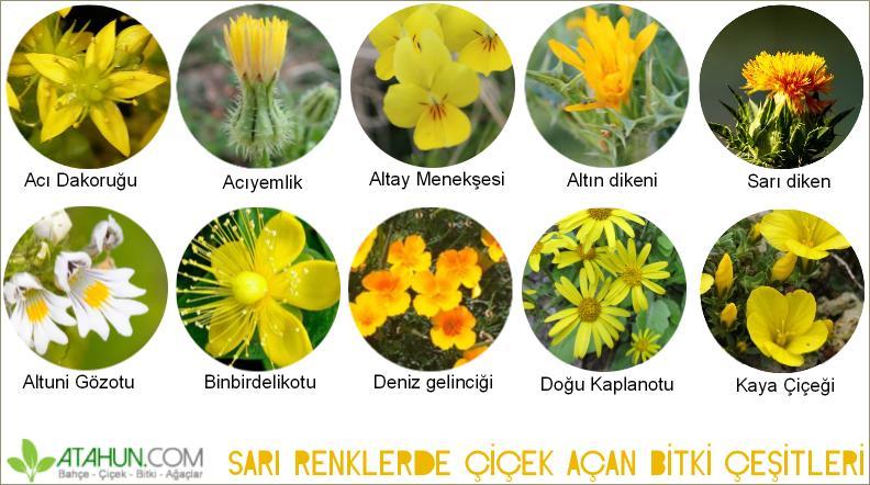 sarı çiçek açan bitkilerin isimleri
