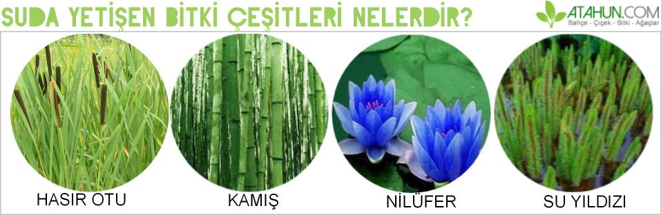 suda yetişen bitki isimleri
