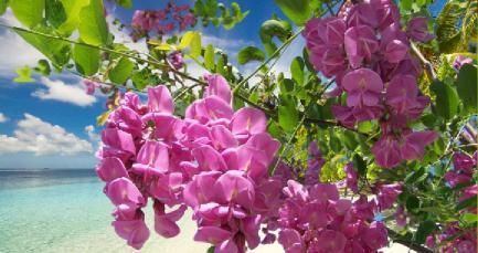 süs ağaçları isimleri nelerdir