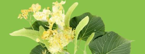 tıbbi aromatik bitki