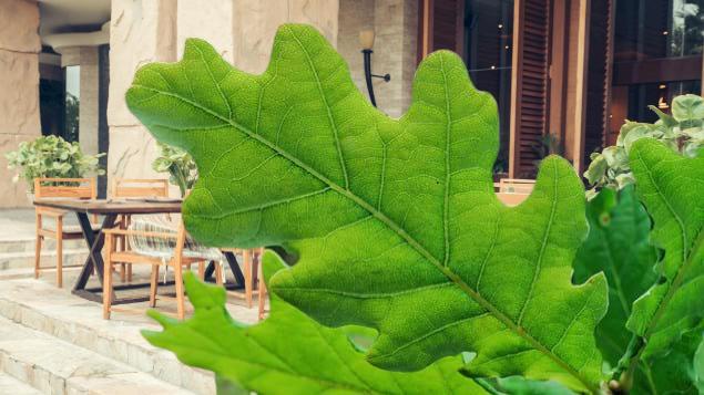 türkiyede geniş yapraklı ağaçlar