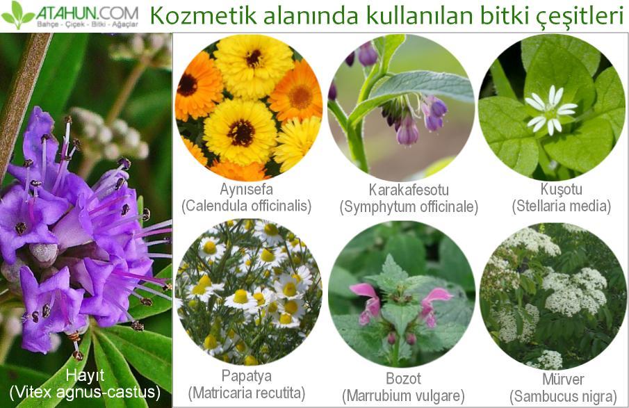 Kozmetik alanında kullanılan bitki çeşitleri