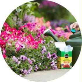 bahçe çiçekleri gübreleme