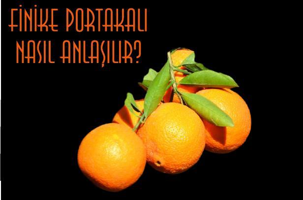 finike portakalı nasıl anlaşılır