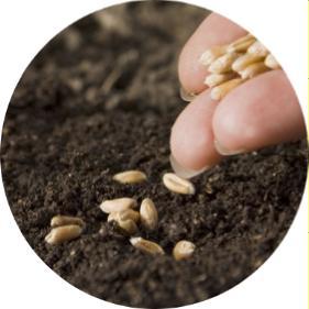 generatif tohumla bitki çoğaltma