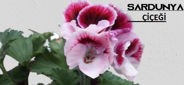 gösterişli çiçek isimleri