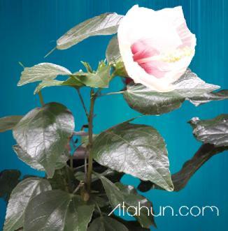 gösterişli çiçekler