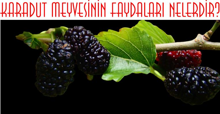 karadut meyvesinin faydaları
