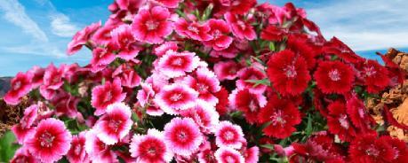 kışlık çiçek listesi