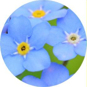 kışlık çiçekler