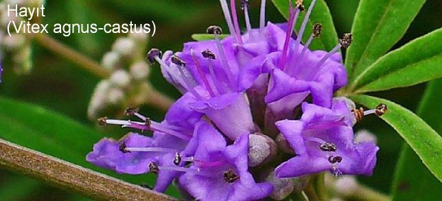 kozmetik sektöründe kullanılan çiçek isimleri