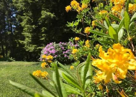 orman gülleri