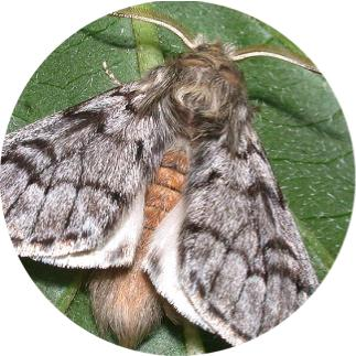 ormana zarar veren böceklerin resimleri