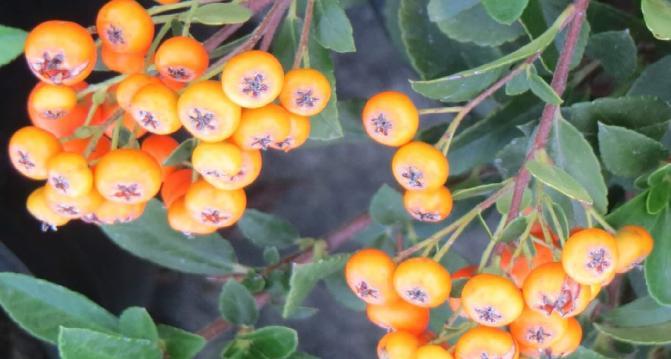 üzümsü bitkiler