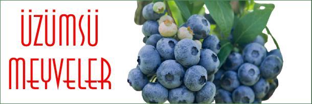 üzümsü meyveler nelerdir