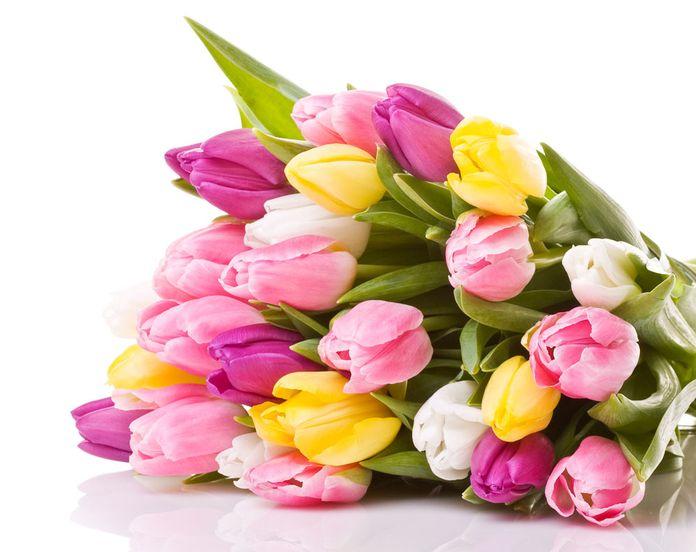 Özür dilemek için hangi renk çiçek Alınır