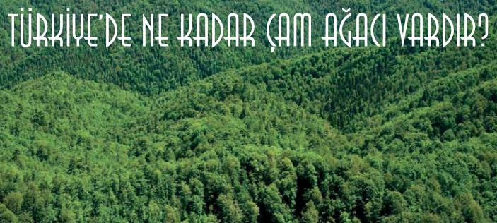 Türkiye'de ne kadar çam ağacı yetişir?