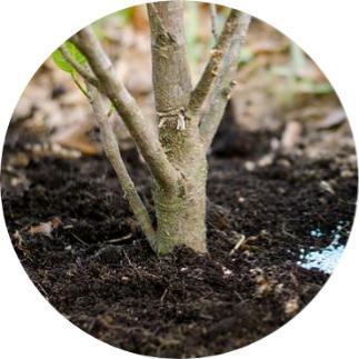 ağaca hayvan gübresi hangi ayda verilir