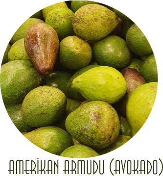 avocado meyvesinin yararları nelerdir
