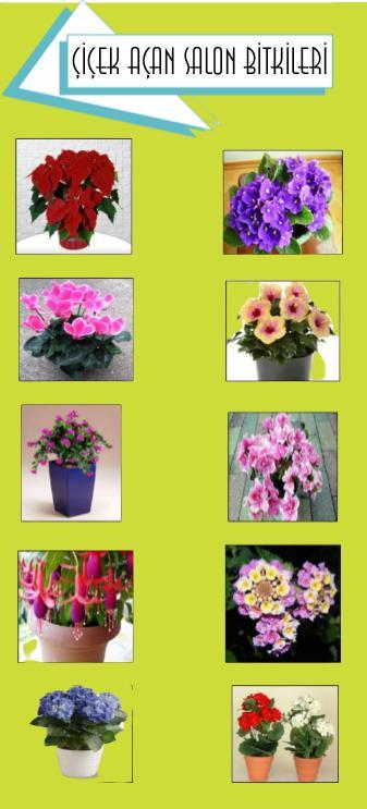 çiçek açan salon bitki isimleri nelerdir