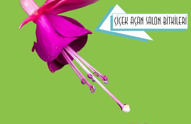 çiçek açan süs bitkileri salonda