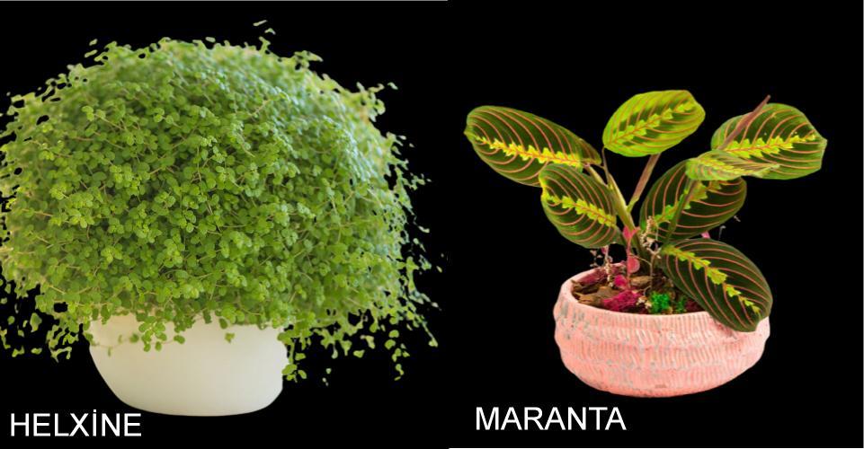 evde yetişen bitki isimleri nelerdir