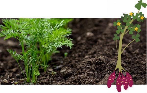 mart ayında bitki sebze dikimi