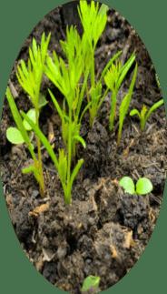 mart ayında ekilen bitkiler nelerdir