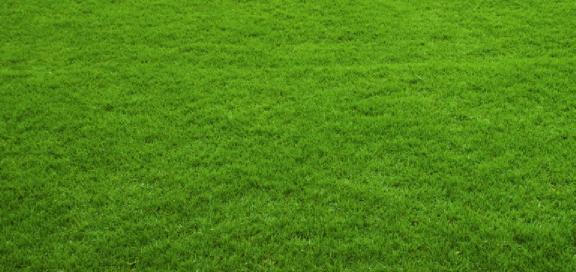 ocak ayı çim bakımı nasıl yapılır