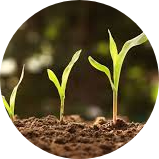 Temmuz ayında ne ekilir?, Temmuz ayında yetişen meyveler, Temmuz ayı ekim dikim, Temmuz ayında yetişen sebzeler, Temmuz ayında bağcılık, Temmuz ayında bahçe işleri