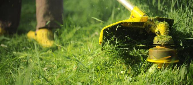 yıllık çim bakımı