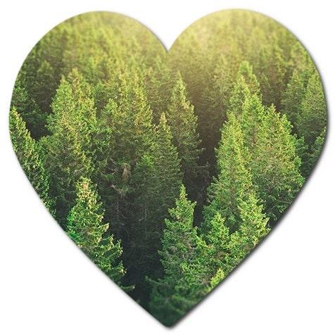 orman alanlarımız