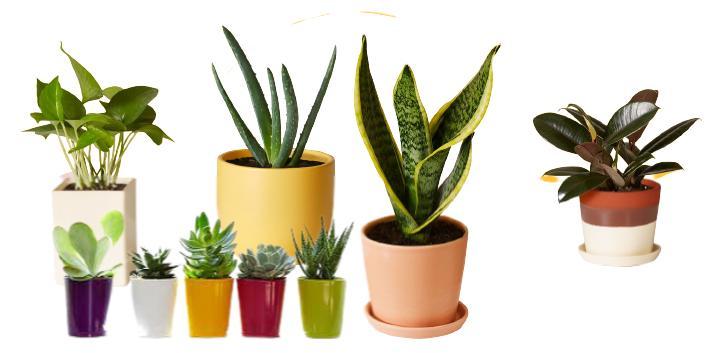 Evde hangi bitkiler yetiştirilmeli
