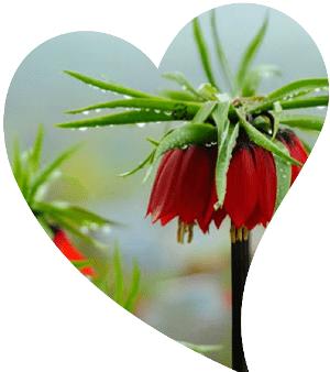 anadoluda endemik çiçekler