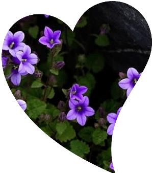 endemik bitki çiçek isimleri