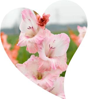endemik çiçek