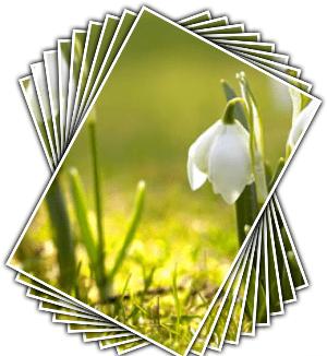 endemik çiçek isimleri