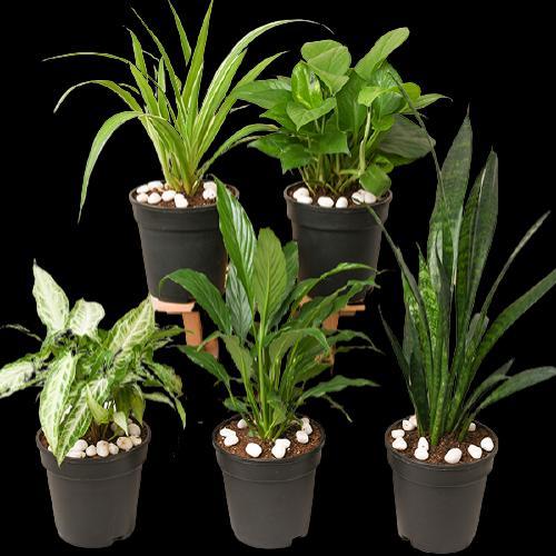 eve en uygun bitkiler
