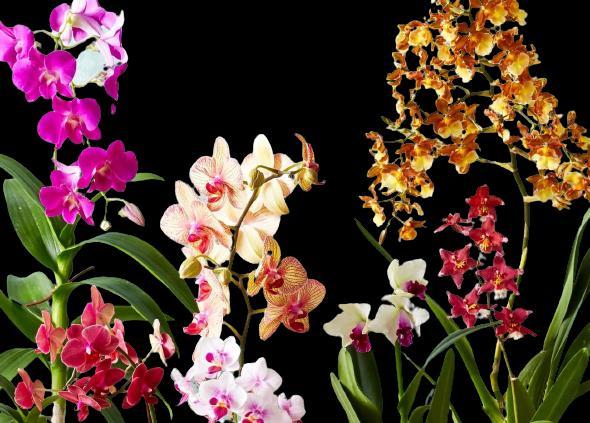iç mekanlarda çiçeklendirme nasıl yapılır