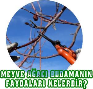 meyve ağacı budamanın faydaları